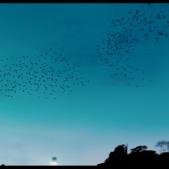 biutiful-birds