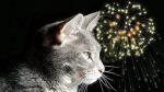 gatto_fuochi_artificio