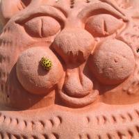 Psyllobora vigintiduopunctata - La coccinella gialla!